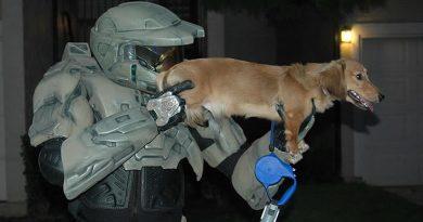Halo Dog